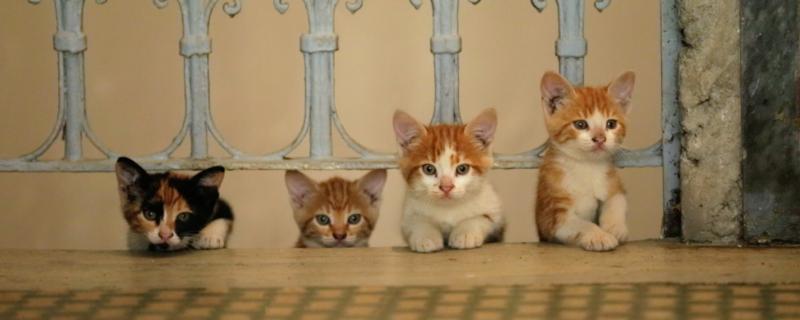 Kici - dwa filmy o kotach