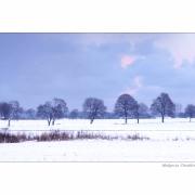 Ostrość, głębia, kadr i cyk fotka już jest !!! natura zimowa
