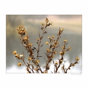 Ostrość, głębia, kadr i cyk fotka już jest !!! roślinka