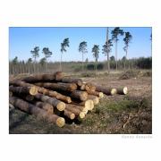 Ostrość, głębia, kadr i cyk fotka już jest !!! drewno