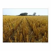 Ostrość, głębia, kadr i cyk fotka już jest !!! obrazy wiejskie