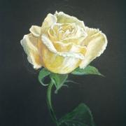 E. Rydzykowska - Róża